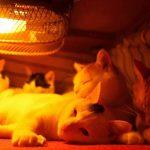 こたつ、ホットカーペット……暖房器具に集まる幸せそうな猫たち