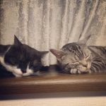 気がついたら寝ている!猫の睡眠時間について