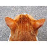 【パーツ萌え♪】猫の「後頭部」がたまらない!異様にときめくんです!!