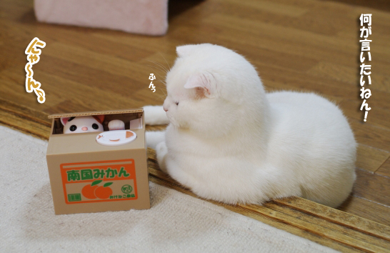 貯金箱で猫が遊ぶ!?猫好きにはたまらない貯金箱をご存知ですか?