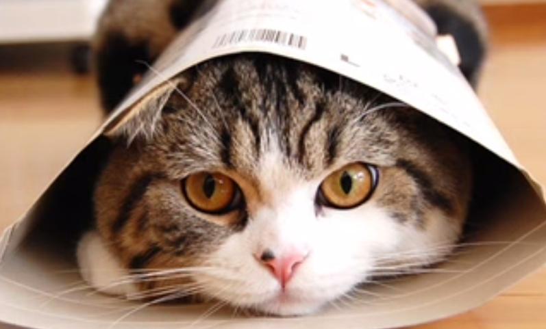 箱芸だけではありません!滑り込む猫「まるちゃん」について