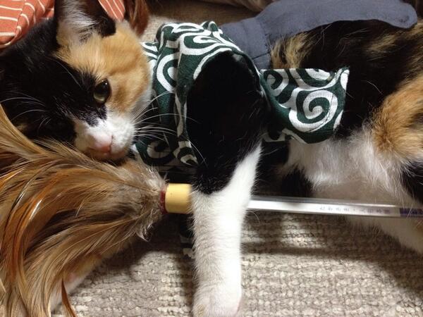 教えて猫先生!「事始め」を正しく「ねこる」方法♪
