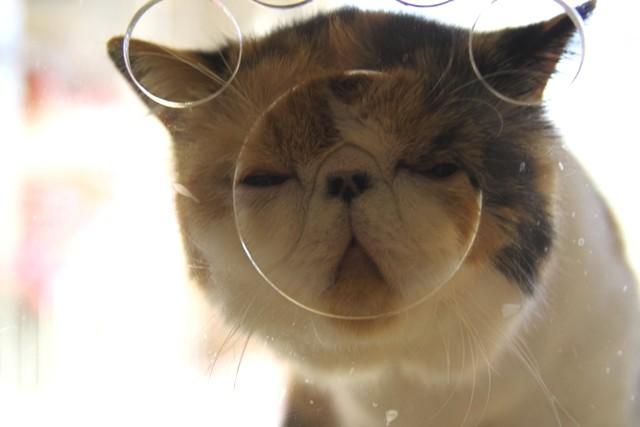 芸人さんも顔負け!猫の変顔・選手権
