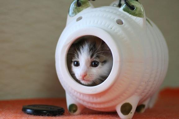 猫あるある!「使い方を間違えちゃってる」猫ちゃんたち