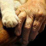 【ほっこり】心が温かくなる、猫とおじいさんおばあさんの日常