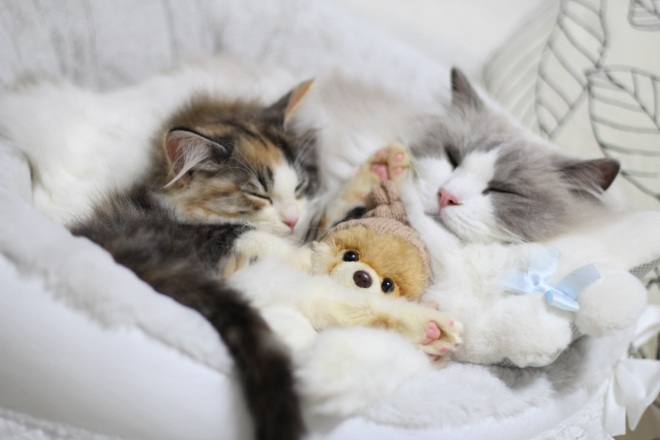 【かわいい×かわいい】それはズルイ!?猫とぬいぐるみの組み合わせがかわいすぎる