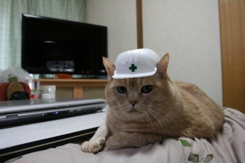 【備え編】地震、災害……その前に、最愛の猫のためにできること