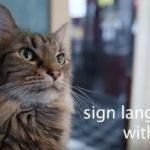 【感動】人と猫のあったかエピソード3選