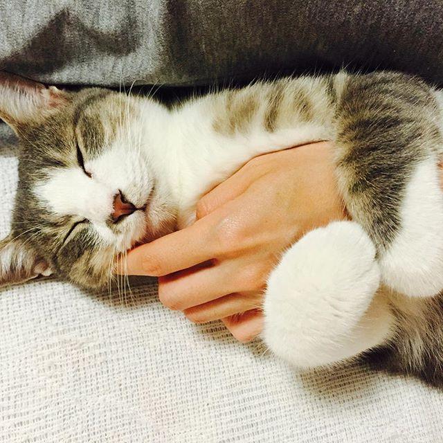 抱きつき猫