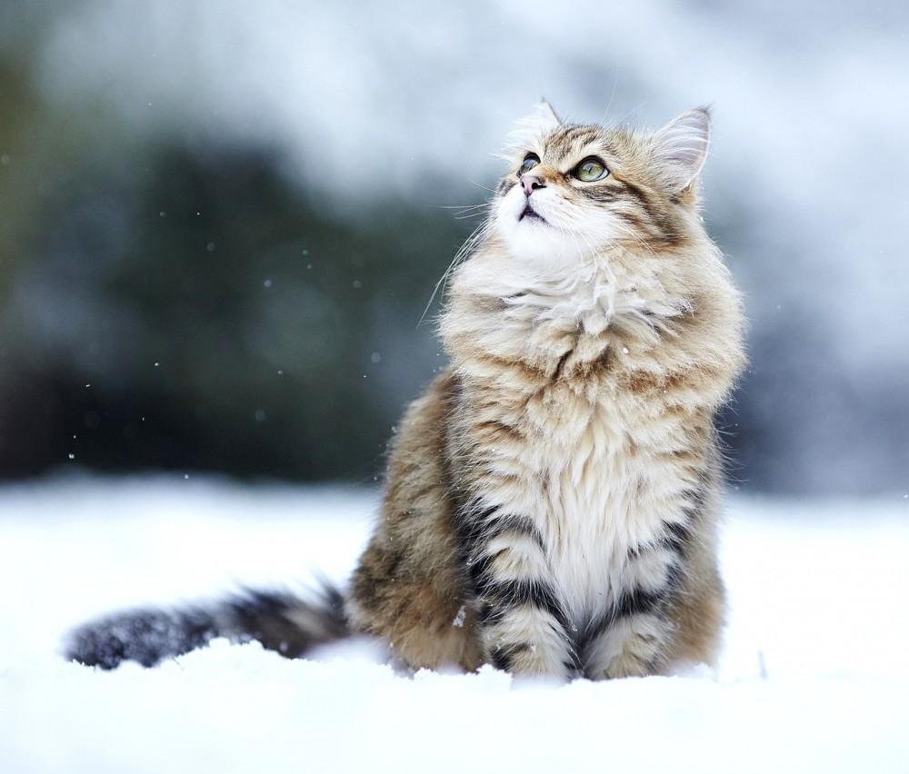 猫だって雪で遊びたいニャ♪雪で遊ぶ猫ちゃんが可愛い