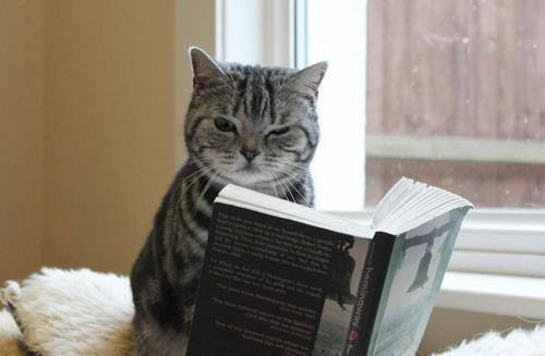 【猫雑誌まとめ♪】 2016年の読み初め「猫雑誌」はどれにしよ?