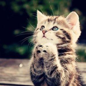 猫缶が欲しい
