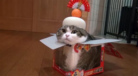 我が道をゆく!?何事にも動じずリラックス・タイムを満喫する猫たち