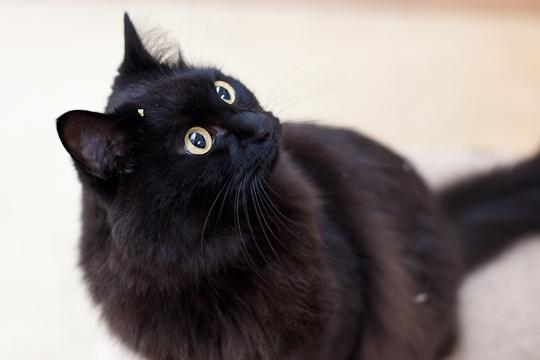 【しゃべる猫】人間の言葉を理解している(?)猫ちゃんたち♪