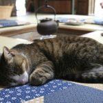 やっぱり似合う!昔ながらの日本家屋と猫の組み合わせ画像。