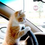 愛猫を連れてドライブを楽しみたい♪
