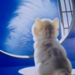 思わず触れたくなる!猫好きの心を捕らえる『むらまつねこ』
