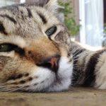 猫好き天国の宿♡猫カフェならぬ猫宿が大分の湯布院にあった!あなたはどの猫ちゃんと寝る?