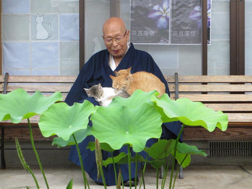 お坊さんが猫と戯れる!?福井には猫の楽園「ぬこでら」があります!