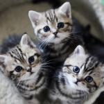 【2月22日は猫の日】猫愛に溢れる画像で癒されよう♡
