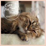 【これは買いでしょ?!】Afternoon Tea がプロデュースする猫グッズが可愛い過ぎる