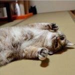 【看板猫ランキング1位決定!】別府に15匹もの猫が暮らす温泉旅館があった!