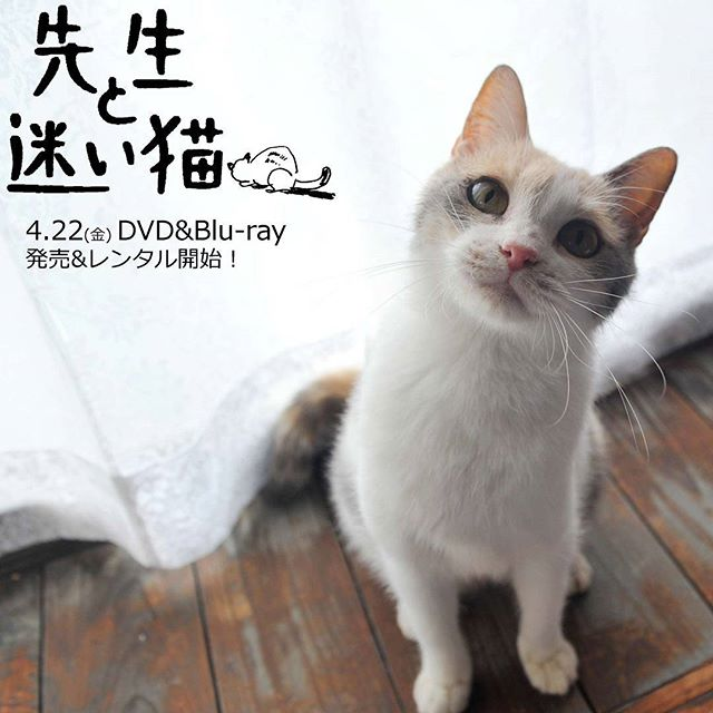 タレント猫と言えばこの子!大女優のドロップさん♪