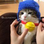 日本中の猫がドラえもんに!マクドナルドのハッピーセットが猫たちに大人気!