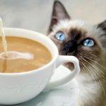 【転職してみる?】イギリスにオープンする猫カフェで猫ちゃんのお世話係募集中!