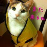 仲間の命を救うために。供血猫として生きた「ばた子」さんの物語