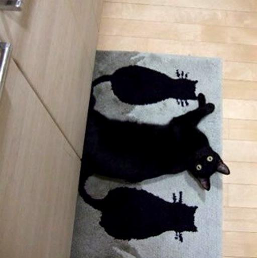 【どこにいるの?】いろんなものと同化している猫ちゃんにビックリ!!