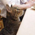 おじさま達のパラダイス♪新橋の居酒屋さんに何でも話を聞いてくれる看板猫ちゃんがいた!