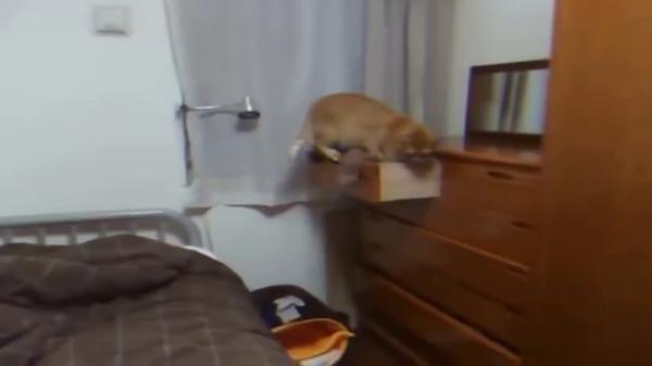 犯行現場をおさえられた猫。顔を背けて知らんぷり。いやいや、見られてますから(笑)