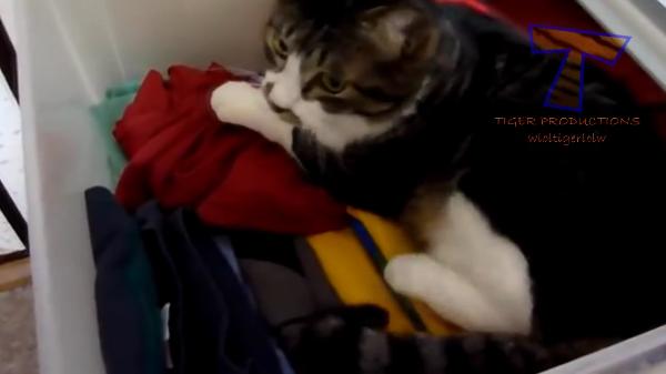 叱られちゃった・・・。イタズラが見つかって叱られる猫ちゃんたちが面白いやら可愛いやら