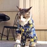 ベルを鳴らすとおやつを貰えるネコが、おやつが無くなった時に取った行動とは??