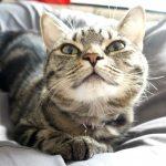 【知っていてほしい!!】猫ちゃんにとってアロマは危険・・・。