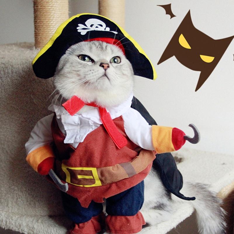 【コスプレ猫】海賊のコスプレをした猫たちがワル可愛い♪