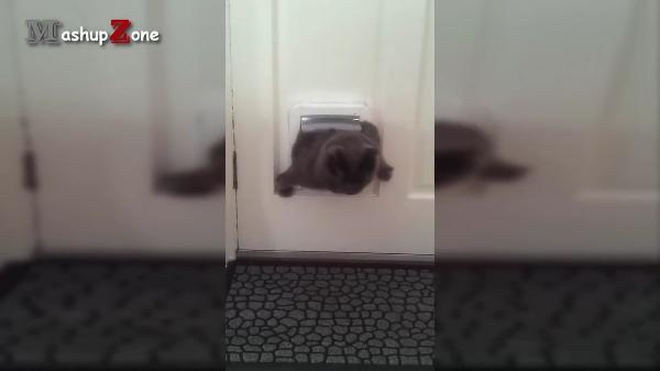 太りすぎー! 猫用出入り口が小さく見えるおデブさんたち
