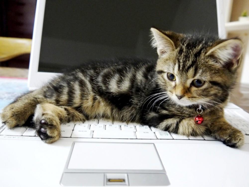 【わたしの負けです】邪魔をしてくる猫様にはとうてい勝てない!!