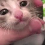 拾ってきた子猫を拾った優しい飼い主さんに感動(´Д⊂ヽ拾ってきた赤ちゃん猫をお風呂に入れる