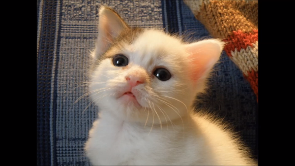 キュン死必至!そんな目で見ないで~(〃∇〃)訴えかけるネコの眼差しが可愛すぎる(*´艸`*)