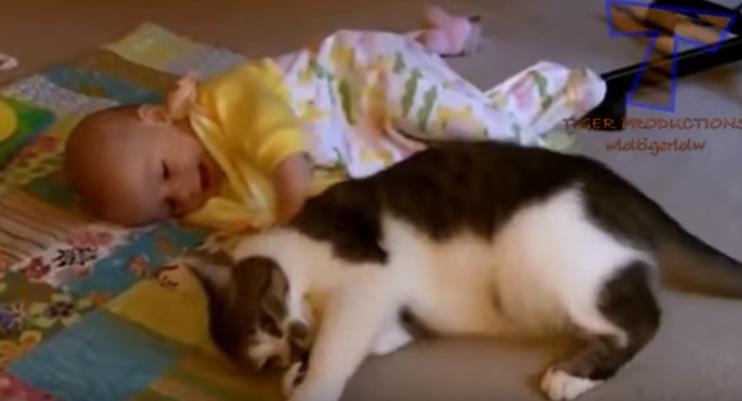 まるで兄弟!?人間の赤ちゃんと遊ぶネコたちが微笑ましい(*´ω`*)