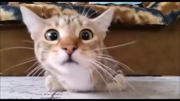 人間が怖いものは猫も怖い(´・ω・`)猫にホラー映画を観せてみた時の反応が可愛い♪