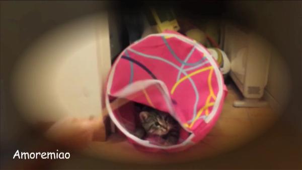 洗濯物の入った袋の中に住みついちゃった子猫ちゃん!勝手に動く袋が可笑しすぎて爆笑・・・!