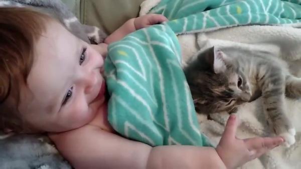子猫ちゃんをなでなでする人間の赤ちゃん♡仲睦まじい姿に癒される♡