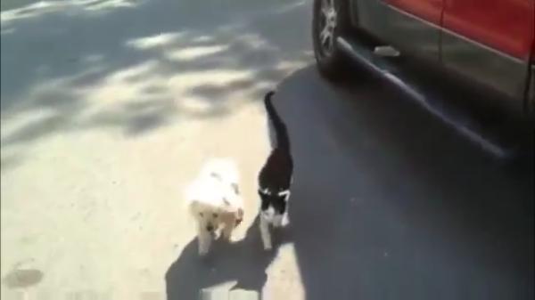 【感動】盲目の犬の散歩を介助する親友の猫。その友情に思わず涙・・・
