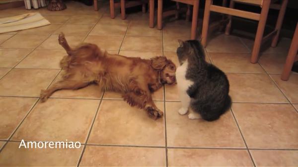 猫「猫パンチは、こうよ!!」犬「難しい~」犬に取っ組み合いのやり方を教授する猫ちゃん!なんだかとっても楽しそう♪