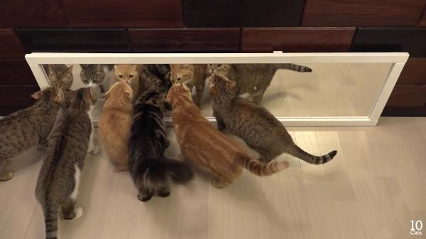 鏡の前に集まる猫ちゃんたち!「だれ!あんた!超美人じゃない!」