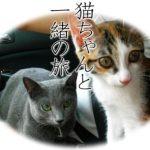 【猫連れ専門の貸別荘】今年の夏は愛猫と一緒に旅行しませんか?