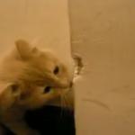 【衝撃】家の壁を食べる猫!!!!ガリガリ・・・ムシャムシャ・・・「おいしいにゃ~♪」一体どんな味がするの!?